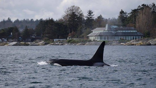 SpringTide Whale Watching & Charters: photo1.jpg