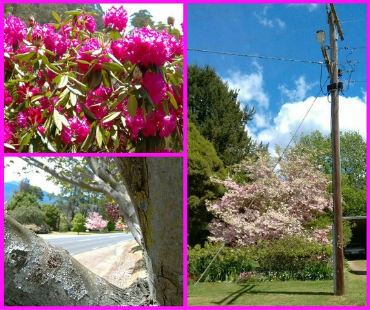 Blackbird Cafe: Bright is very beautiful with lots of flowering bushes and trees. And a very busy tourist trade