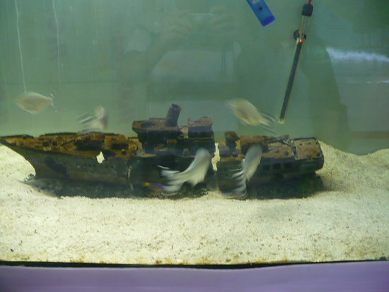 Bartolomeu Dias Museum Complex: Shell Museum with a small wreck in a fishtank