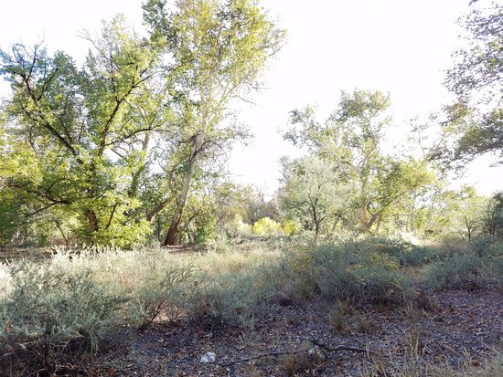 Montezuma Castle National Monument: The trees in the valley.