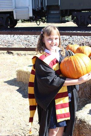 Williams, AZ: Pick your own pumpkin
