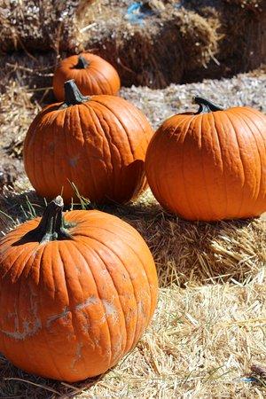 Williams, AZ: Many choices of pumpkins