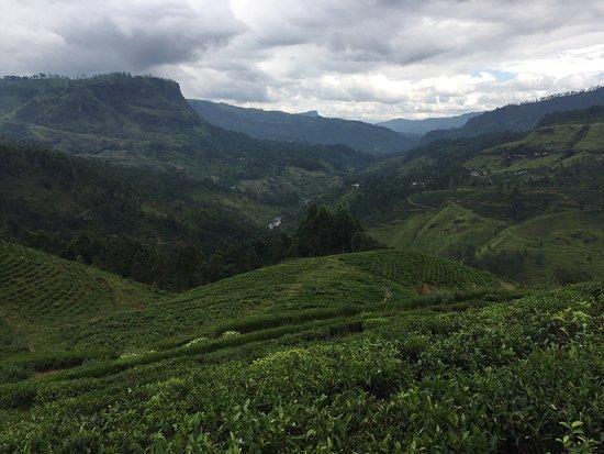Dickoya, Sri Lanka: photo0.jpg