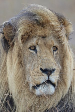 schotia tooth and claw safari