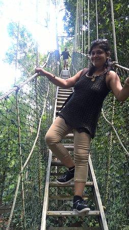 Taman Negara National Park, Μαλαισία: canopy walkway