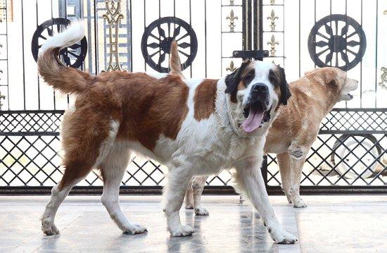 Chandra Niwas Homestay: Dona & Jullie