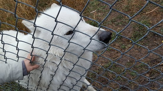 Howlers Inn Bed & Breakfast and Wolf Sanctuary Picture