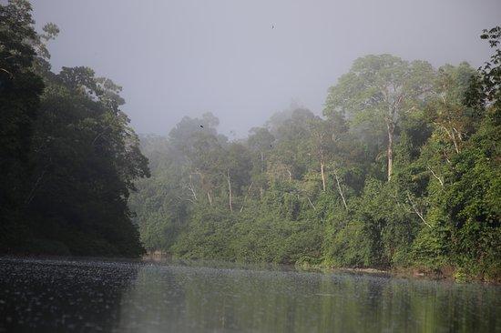 Kabalebo Nature Resort Photo