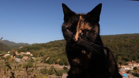 Castellfollit de la Roca, España: Lovely inhabitant