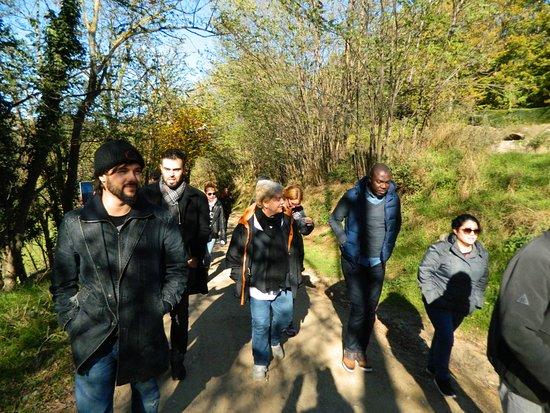 Castanya de Viladrau: Caminando entre Castaños.