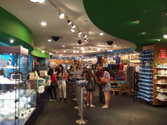 Gift shop picture of the florida aquarium tampa tripadvisor the florida aquarium gift shop negle Choice Image