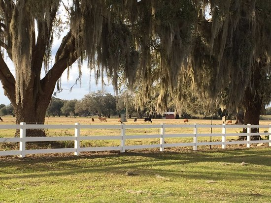 Webster, FL: One of many pasture views