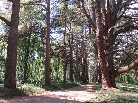 Cheverny, Frankrike: The trees are beautiful.