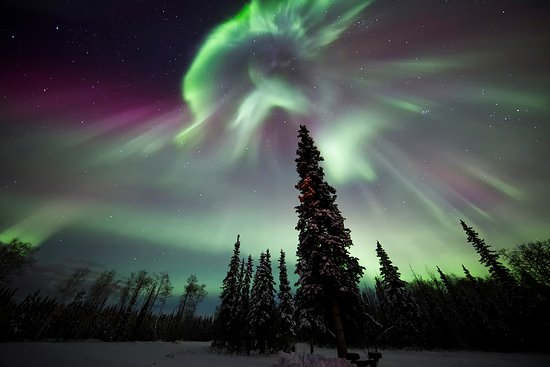 Northern Lights Tours Fairbanks From Los Angekes