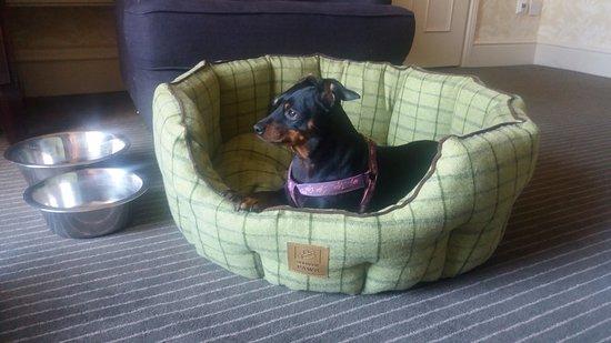 Sellack, UK: Dog Friendly
