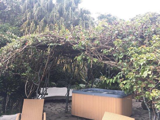 Finca Rosa Blanca Coffee Plantation & Inn: photo3.jpg