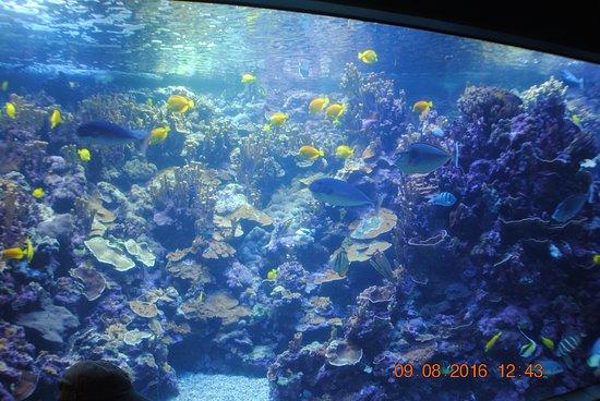 Wailuku, Hawái: beautifull fish