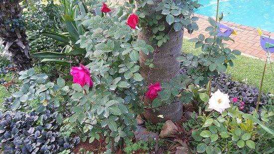 Sabie, Sudáfrica: Garden