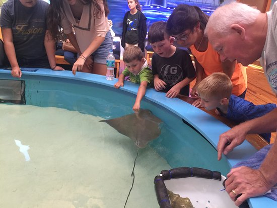 Ponce Inlet, FL: Sting Ray