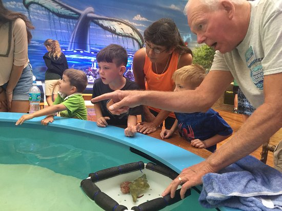 Ponce Inlet, FL: Instruction on how to touch a Stingray