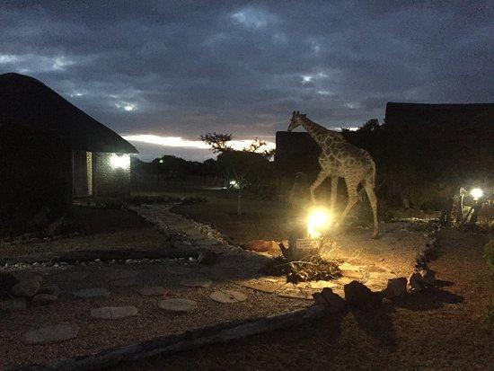 Uitenhage, Южная Африка: photo0.jpg