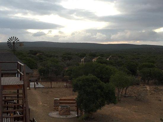 Uitenhage, Южная Африка: photo2.jpg