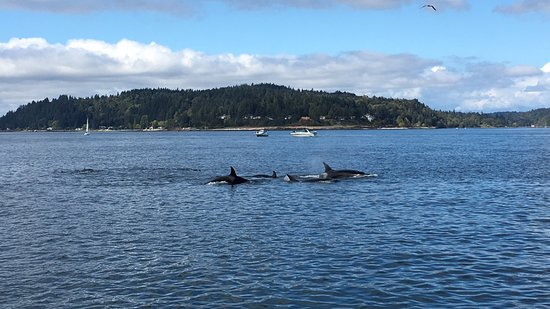 Edmonds, WA: Guaranteed whale watching! Had an awesome time! It's incredible to see these animals in the wild