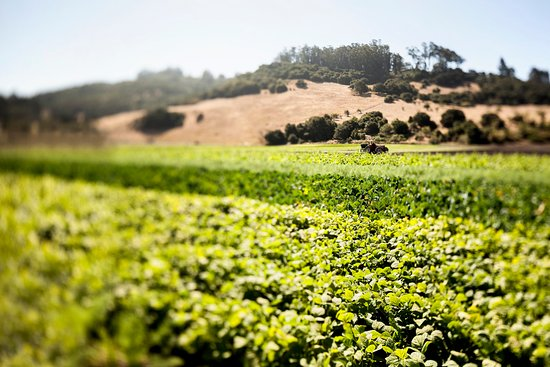 Menlo Park, Kaliforniya: Farm to Table - Farm Scenic View