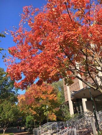 Fall at Upenn Picture of University of Pennsylvania Philadelphia
