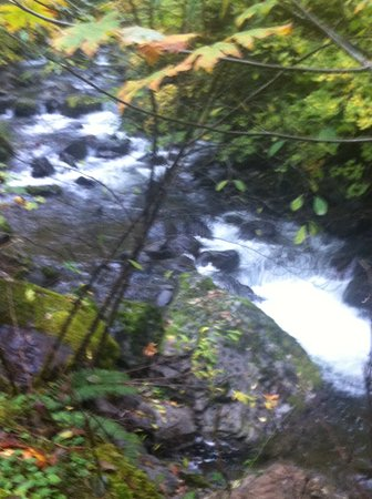 Brinnon, WA: Rocky brook
