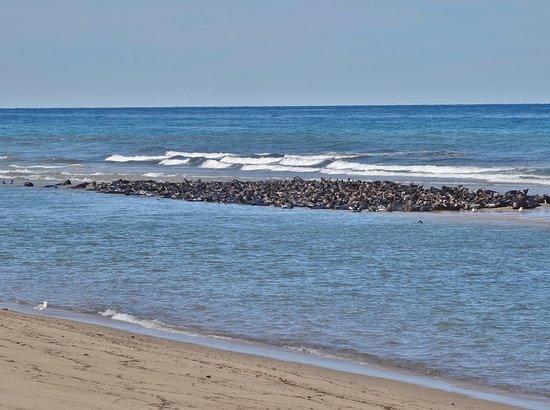 "Truro, ماساتشوستس: Seal ""island"" at low tide"