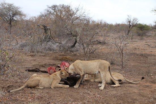 Mohlabetsi Safari Lodge: Morning Safari