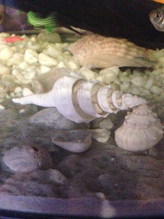 Sea Shell City Museo de Conchas Foto