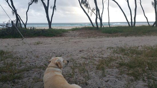 North Stradbroke Island, Australia: The dog has to be on a lead but we have a great view