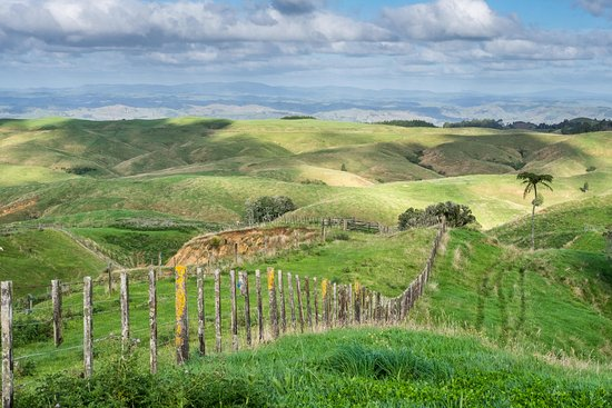 Te Kuiti, New Zealand: Montrose Farm is a working farm offering farm tours & experiences.