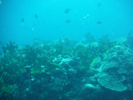 Cow and Calf Rocks : Coral reef with fish, not a great camera