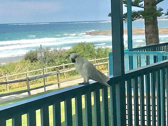 Bulli, Australia: photo3.jpg