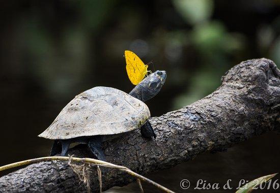 Sani Lodge: Wildlife harmony