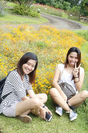 دافاو, الفلبين: Pretty flowers everywhere!