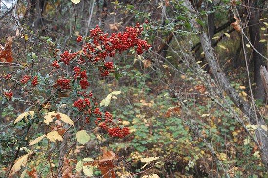 Ashland, Oregón: berries right next to a bridge