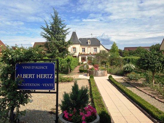 Vins Albert Hertz