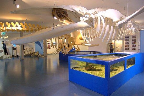 Nes, Niederlande: walvis skelet