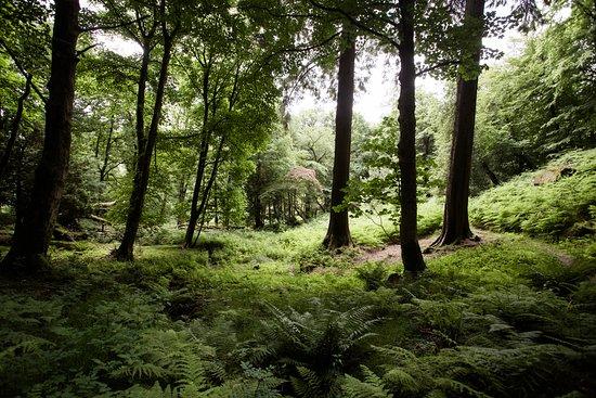 Grasmere, UK: Beautiful trees