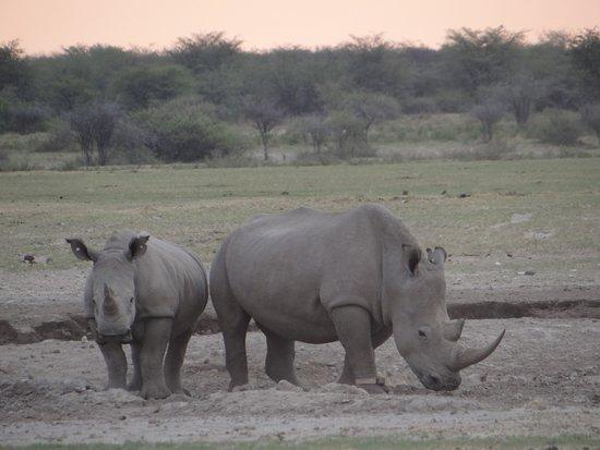 Serowe, Botsuana: Rhino's at the water hole