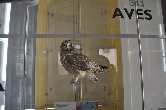 Museo de Historia y Antropologia de Tenerife (Casa de Carta): les oiseaux