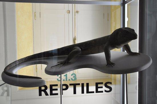 Museo de Historia y Antropologia de Tenerife (Casa de Carta): les reptiles