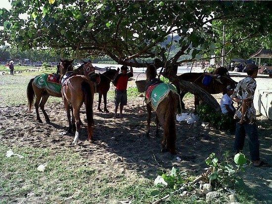 Kebumen, Indonesien: Siapa mau naik kuda???