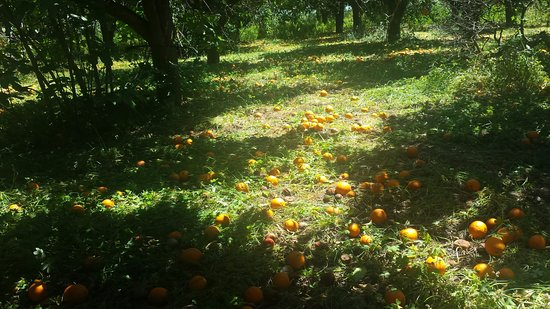 Province of Catania, Italië: Orange production near Catania, a 'real' Sicily