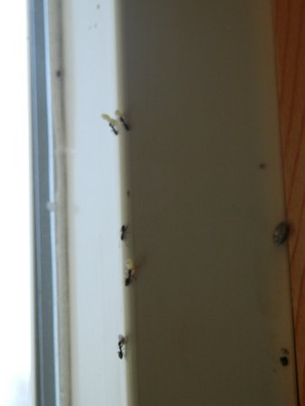 Port Orford, OR: Bugs