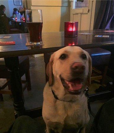 Daventry, UK: Buddy at Early Doors
